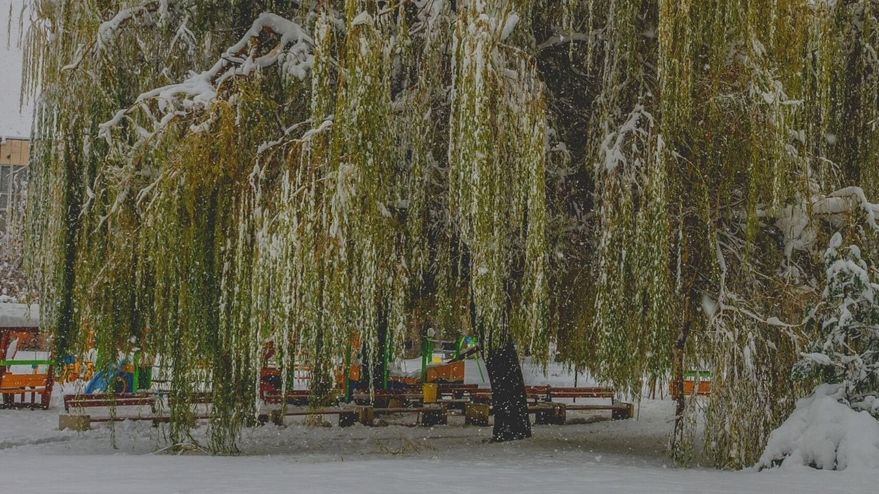 Be Gentle Like the Willow Tree
